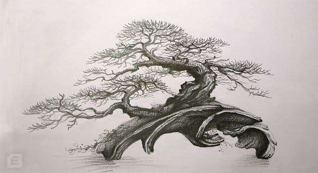 Dessin bonsai pinterest bonsai sketches and artist - Dessin bonzai ...