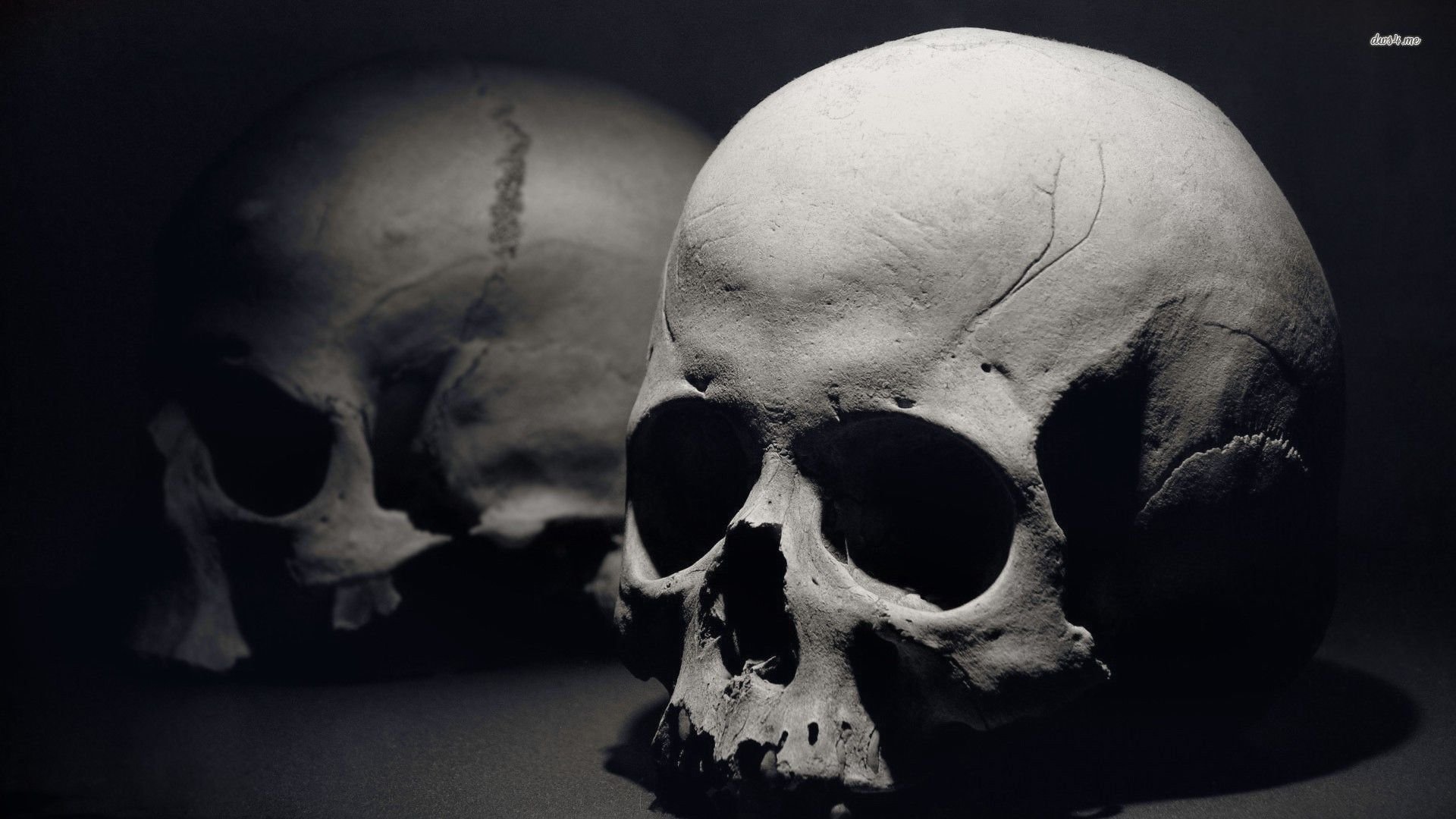Human skull photography black and white google search skull