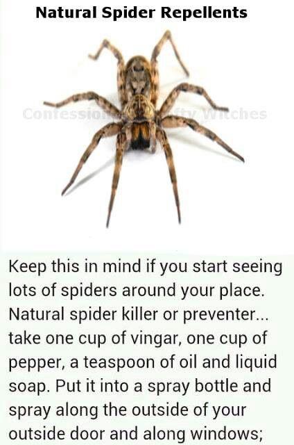ace427b15352750df521f8aa3e9922e6 - How To Get Rid Of A Spider Infestation Outside