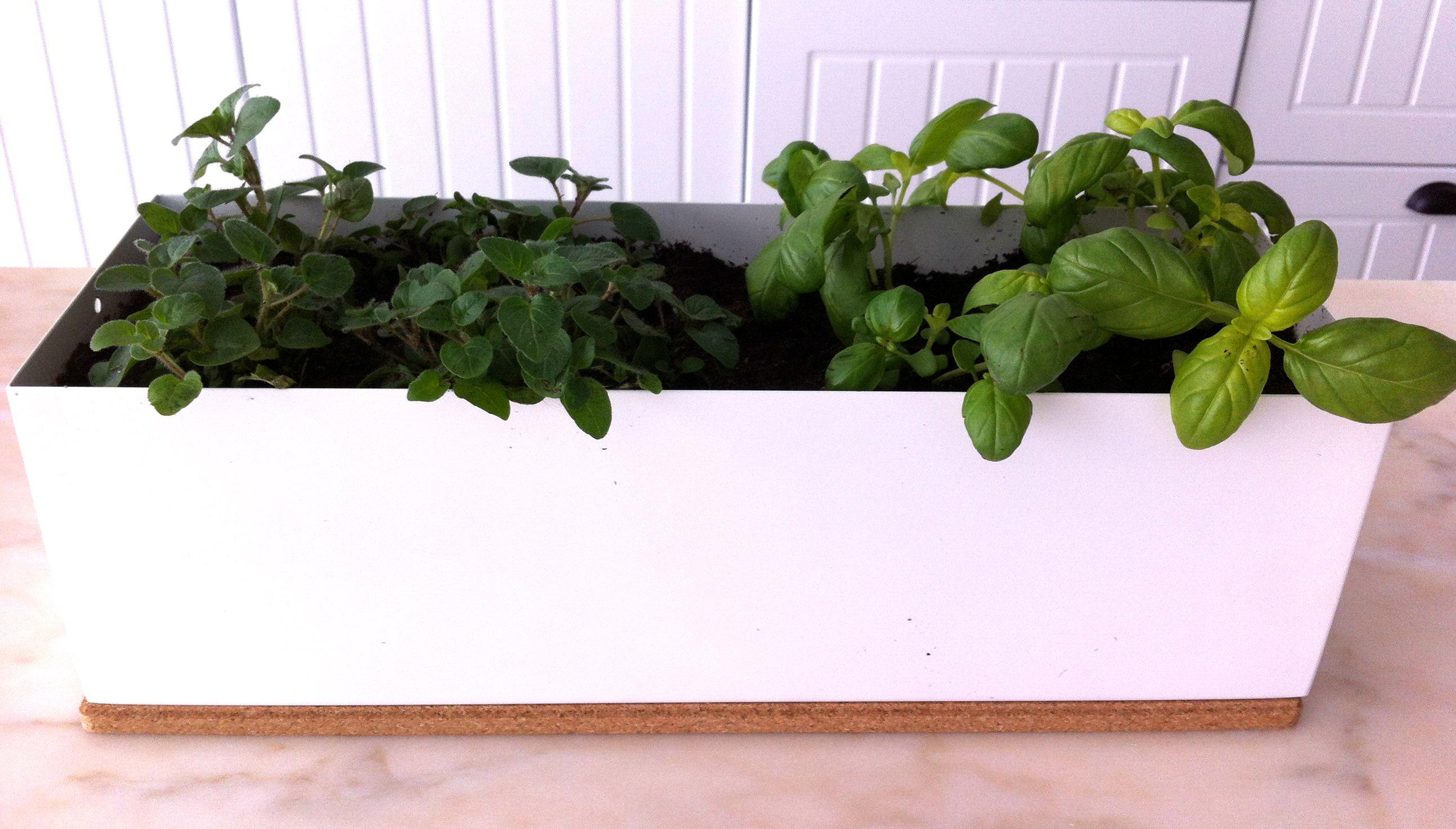 Mini-horta Life in a bag com hortelã e manjericão