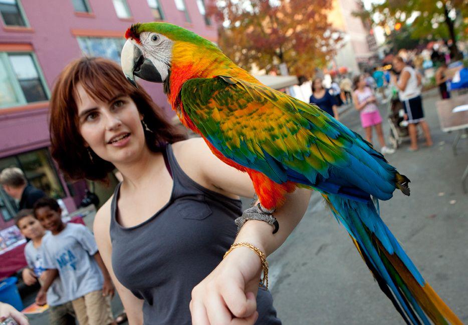 Communiversity Block Party Parrot Cage Parrot Macaw Parrot