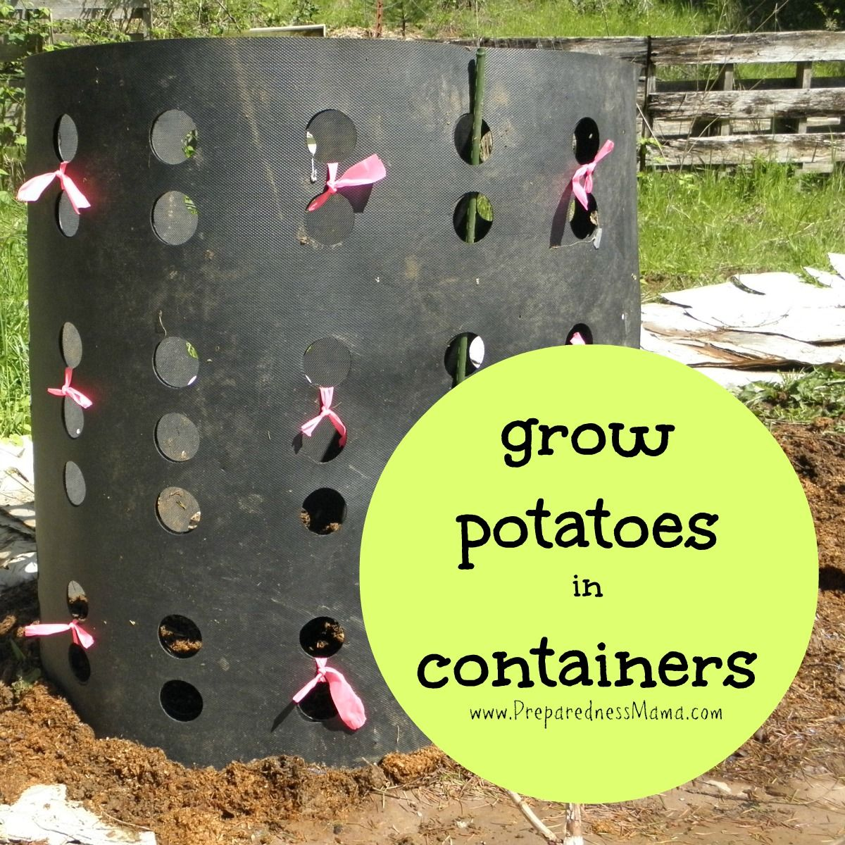 There are many fun and creative ways to grow potatoes in containers and get big yields Find the one thats right for you