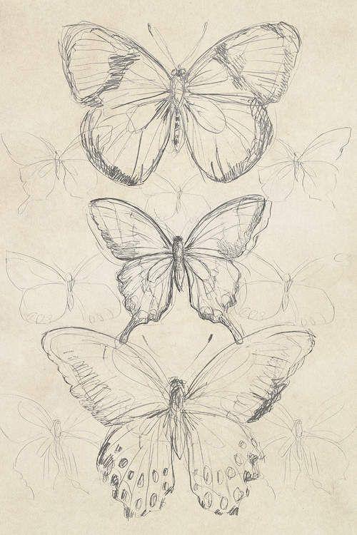 #vintage drawing Vintage Butterfly Sketch I Canvas Artwork by June Erica Vess   iCanvas#artwork #butterfly #canvas #drawing #erica #icanvas #june #sketch #vess #vintage