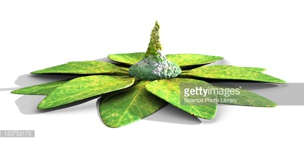 123753173-alien-plant-from-a-high-gravity-planet-gettyimages.jpg 606×282 pikseliä
