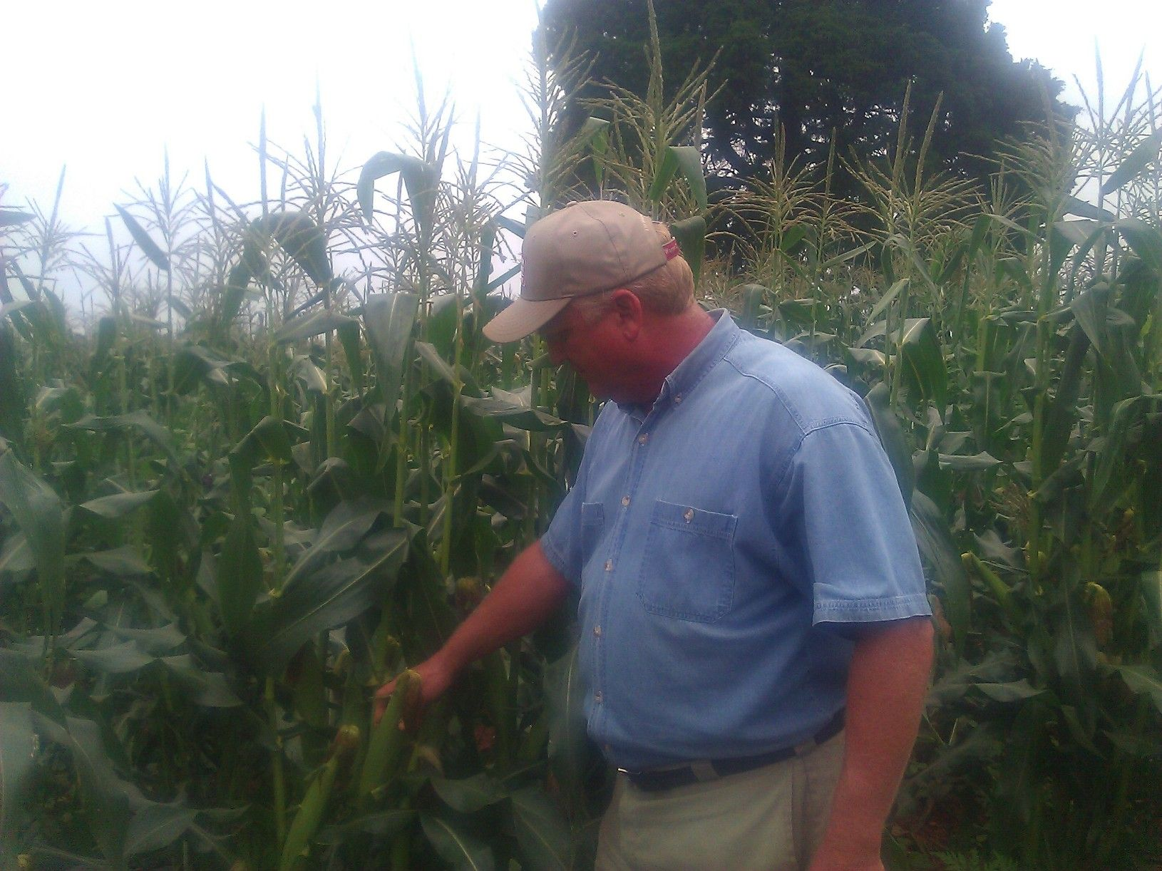 Jeff bender of bender farms is growing corn cantaloupe