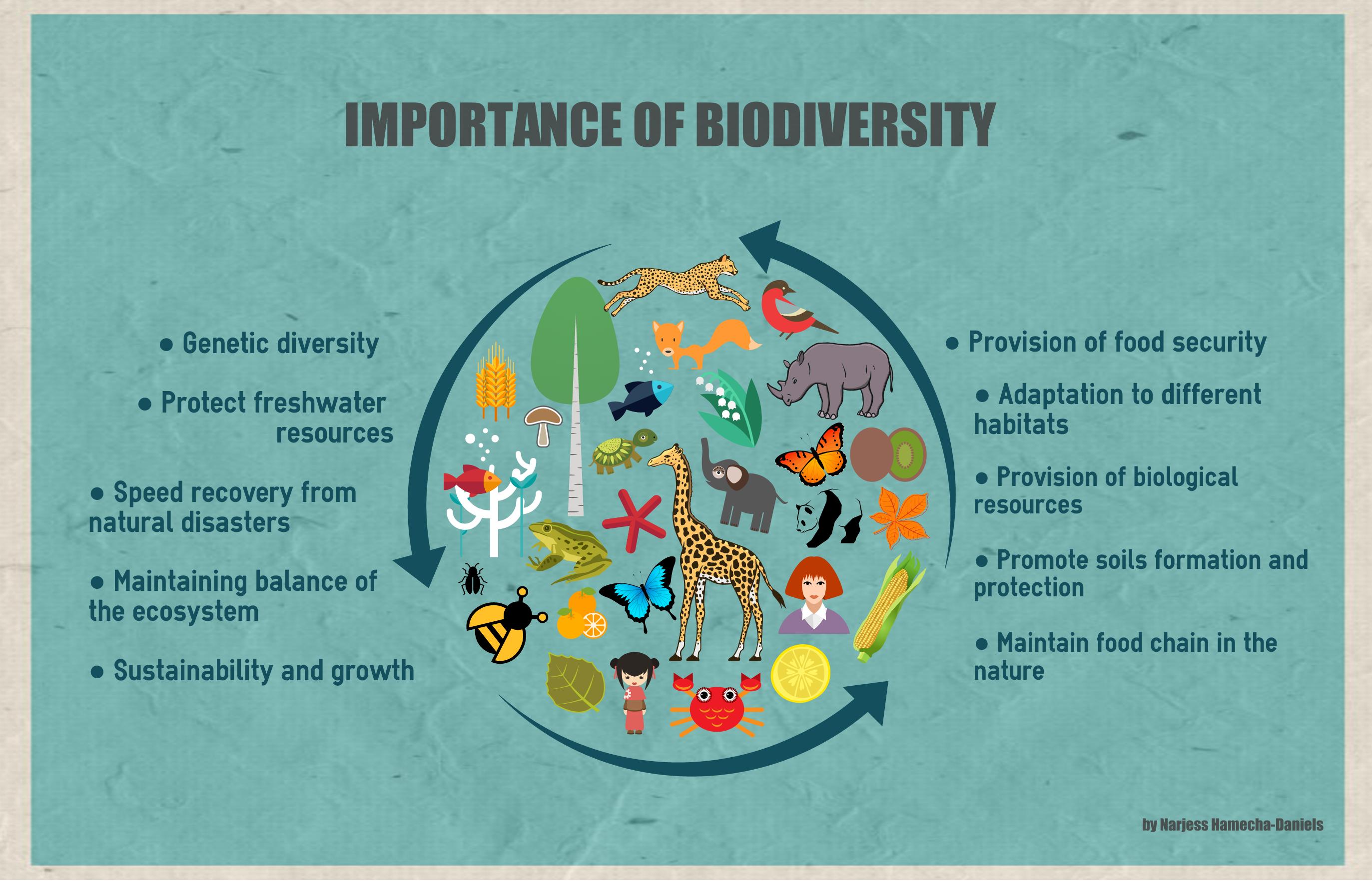 The Importance Of Biodiversity Biodiversity Infographic