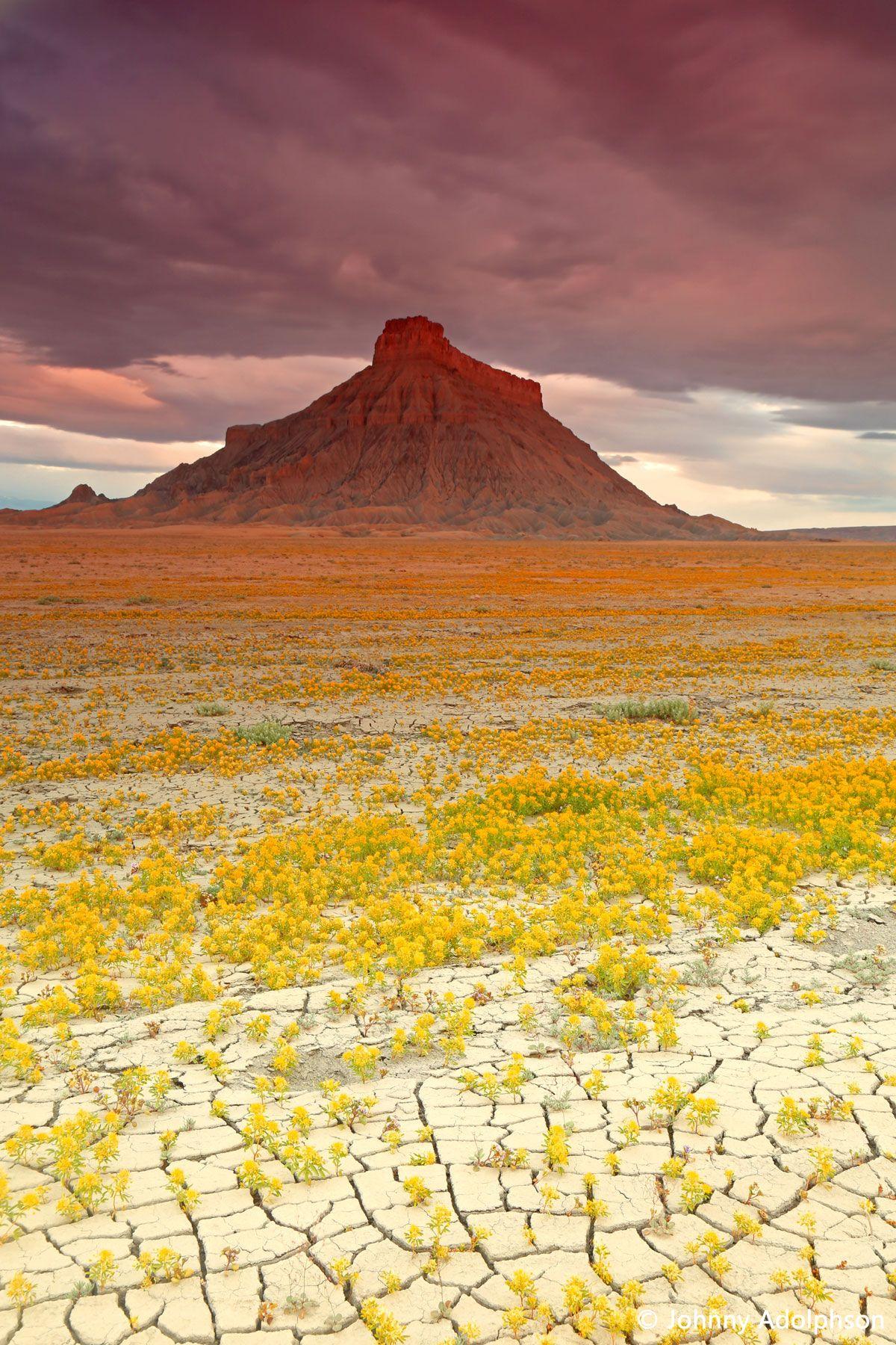 La beauté des fleurs qui survivent en plein milieu du désert aride des Badlands va vous émerveiller #desertlife