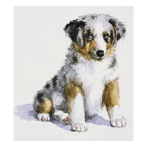 An Australian Shepherd Puppy from My Puppy's Record Book