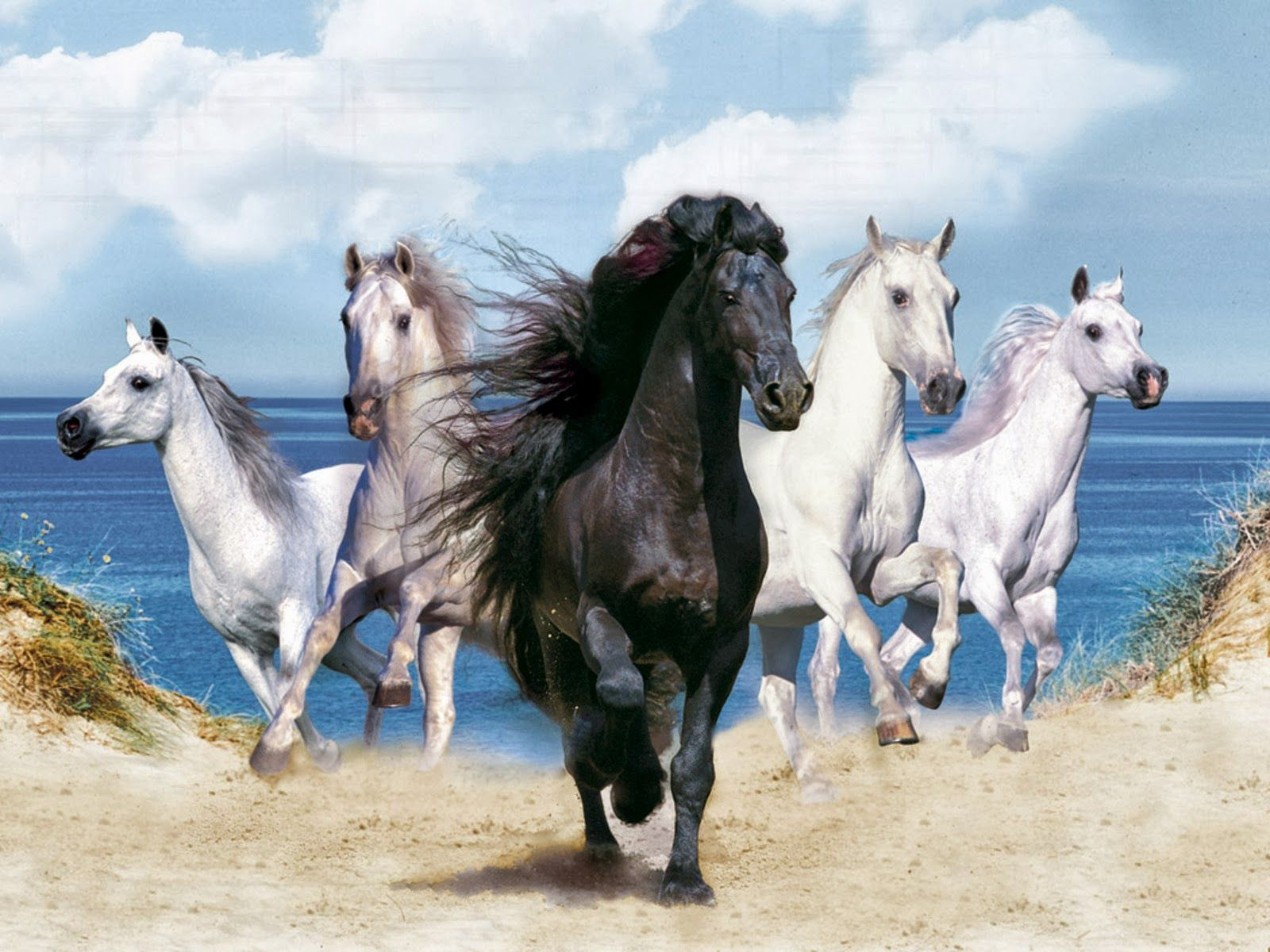 Horses Hd Wallpapers Free Hd Wallpapers Horse Wallpaper Horse Background Horses