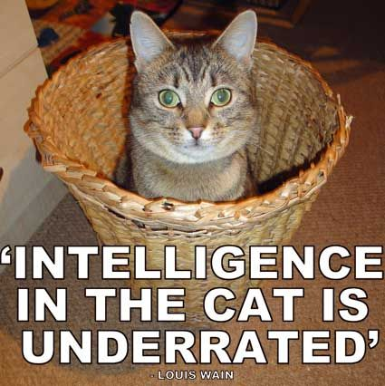 Intelligence In The Cat Is Underrated Cat Quotes Wicker Laundry Basket Laundry Basket
