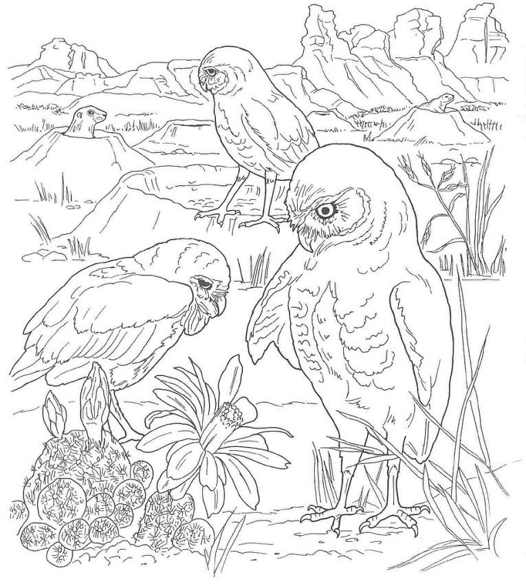 Free Coloring Pages Of Desert Scene | coloring | Pinterest