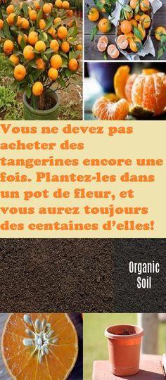 vous ne devez pas acheter des tangerines encore une fois. Black Bedroom Furniture Sets. Home Design Ideas