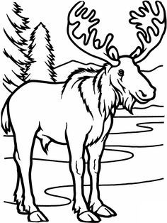 Free Printable Moose Coloring Pages For Kids Animal Coloring