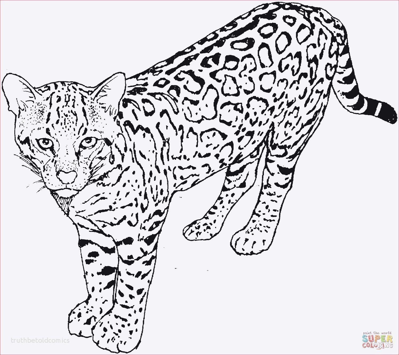 10 Beste Malvorlage Leopard Erleuchtung 2020 Kleurplaten Dieren Luipaard