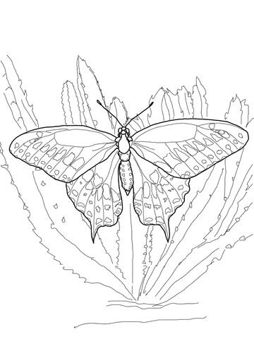 Black Swallowtail Coloring Page From Butterfly Category Select