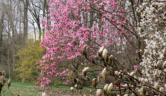 The Barnes Collection   Plants, Barnes foundation, Great ...