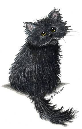 Black Persian Kitten----Looks a Bit Drenched.