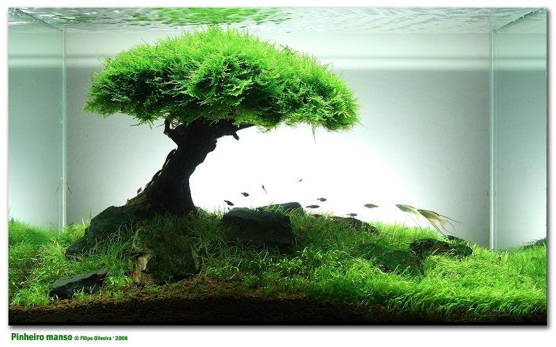 landscape fish tank aquarium