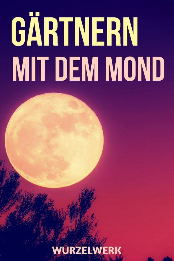 Gartnern Nach Dem Mond Die Aussaattage Von Maria Thun Wurzelwerk Selbstversorger Garten Gemusegarten Tipps Gemusegarten Anlegen