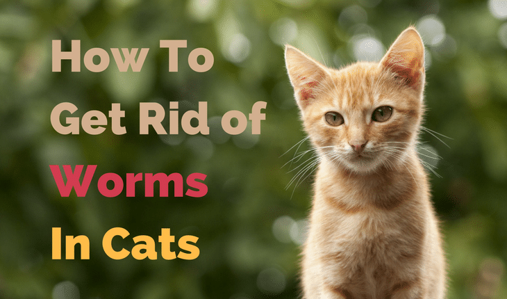 how to treat wolf worms in cats