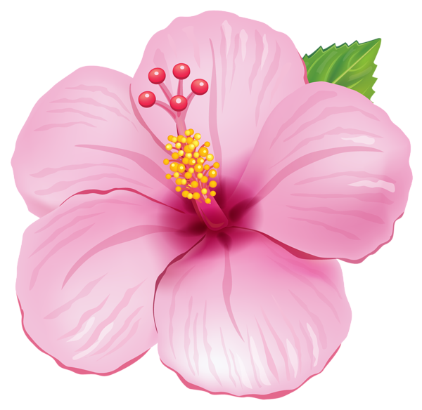Pink Exotic Flower Png Clipart Picture Roze Pinterest