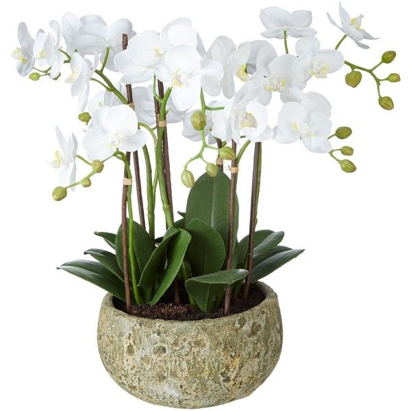 John lewis fusion white artificial orchid in clay pot 47cm liked john lewis fusion white artificial orchid in clay pot 47cm liked on polyvore featuring mightylinksfo