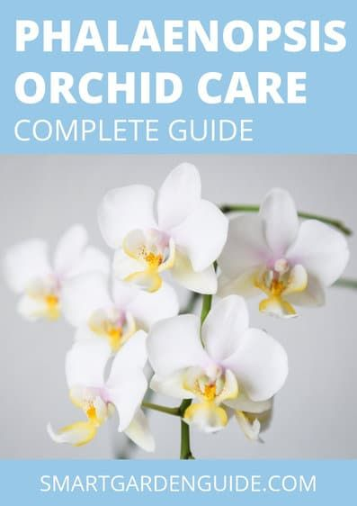 Photo of How To Repot Phalaenopsis Orchids (Moth Orchid) – Smart Garden Guide