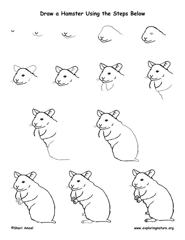 Hamster Cage Coloring Pages