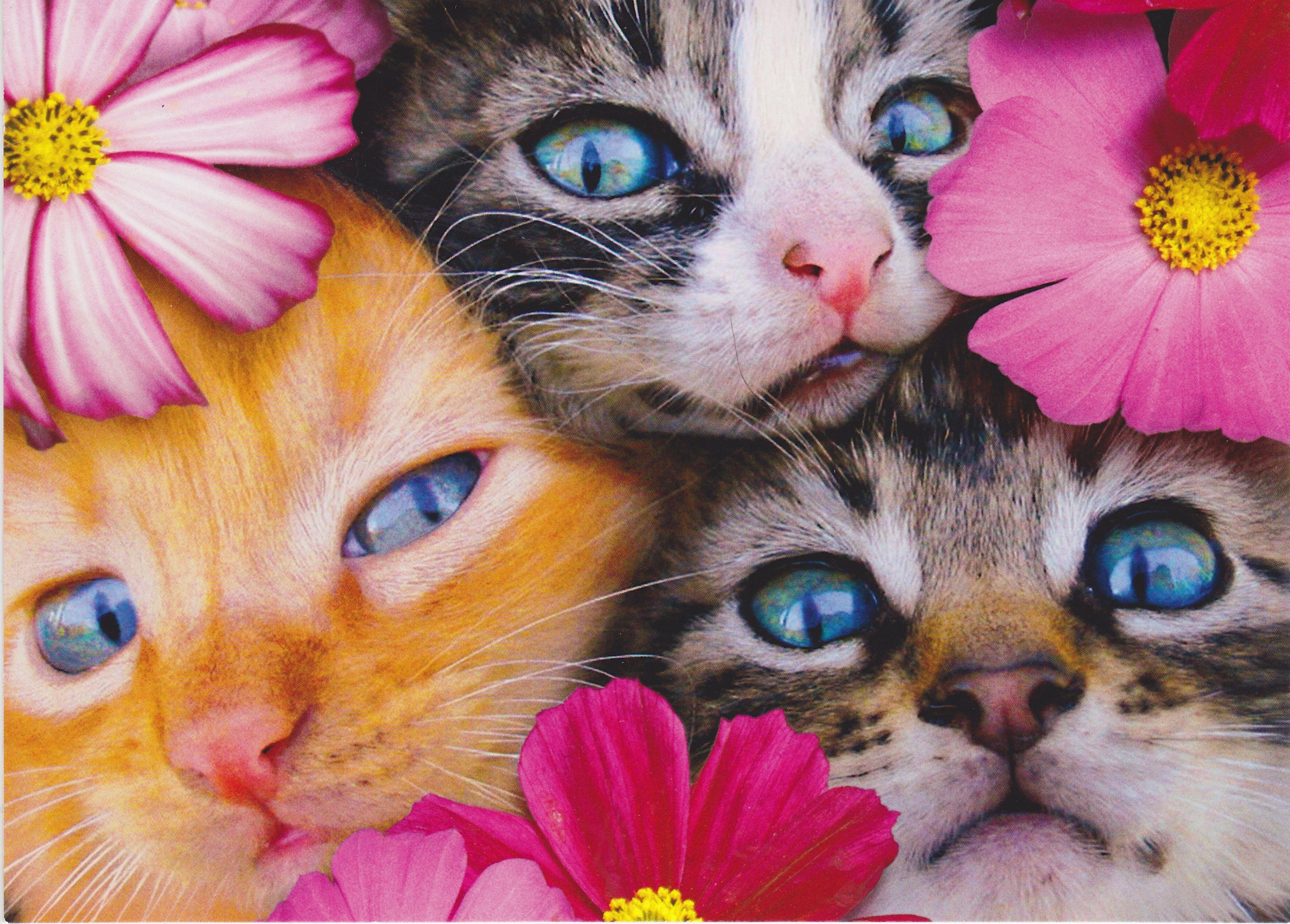 Spring Kittens Selfies!! Kittens cutest, Kittens, Crazy cats