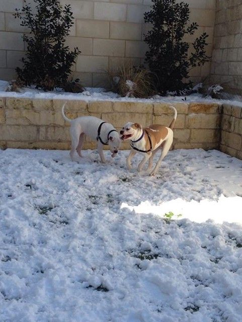 Sicily And Avery Playing Snow Does Not Slow These Two Down Taken By Sitter Ruth Pets Love Your Pet Dog Walking
