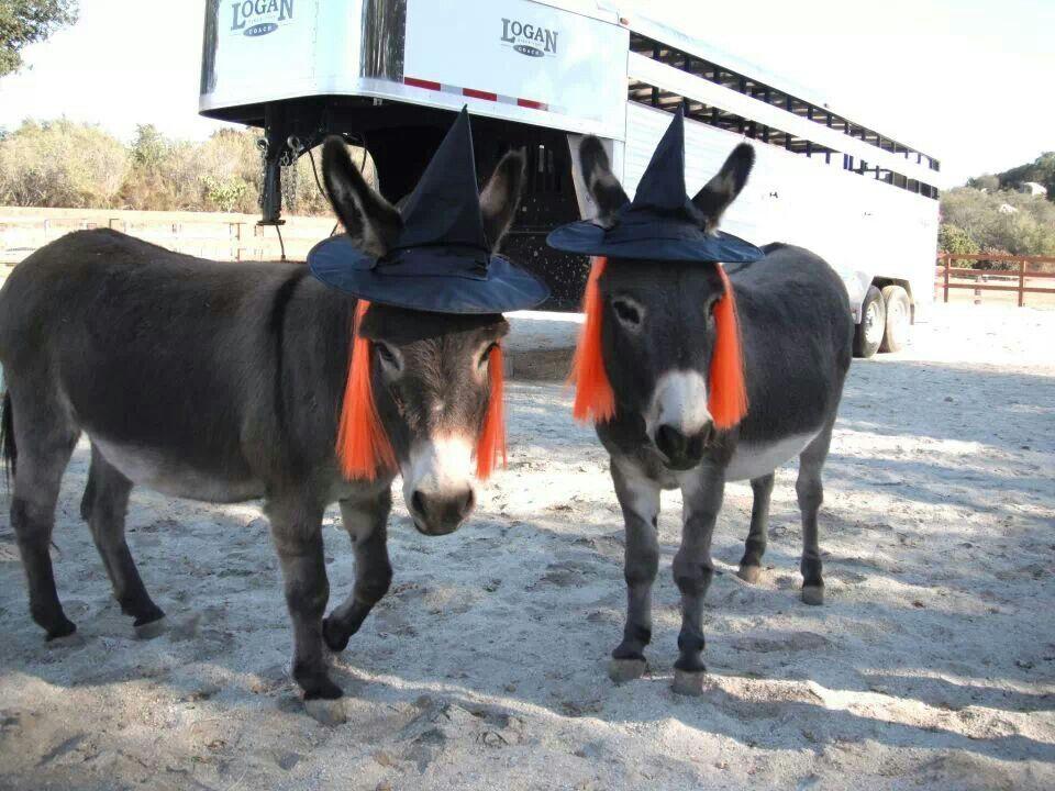 Donkeys Horses Animals Equines