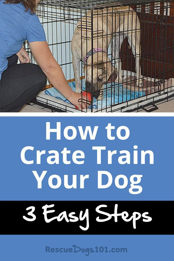 How To Crate Train Your Dog Or Puppy In 3 Easy Steps Doggy