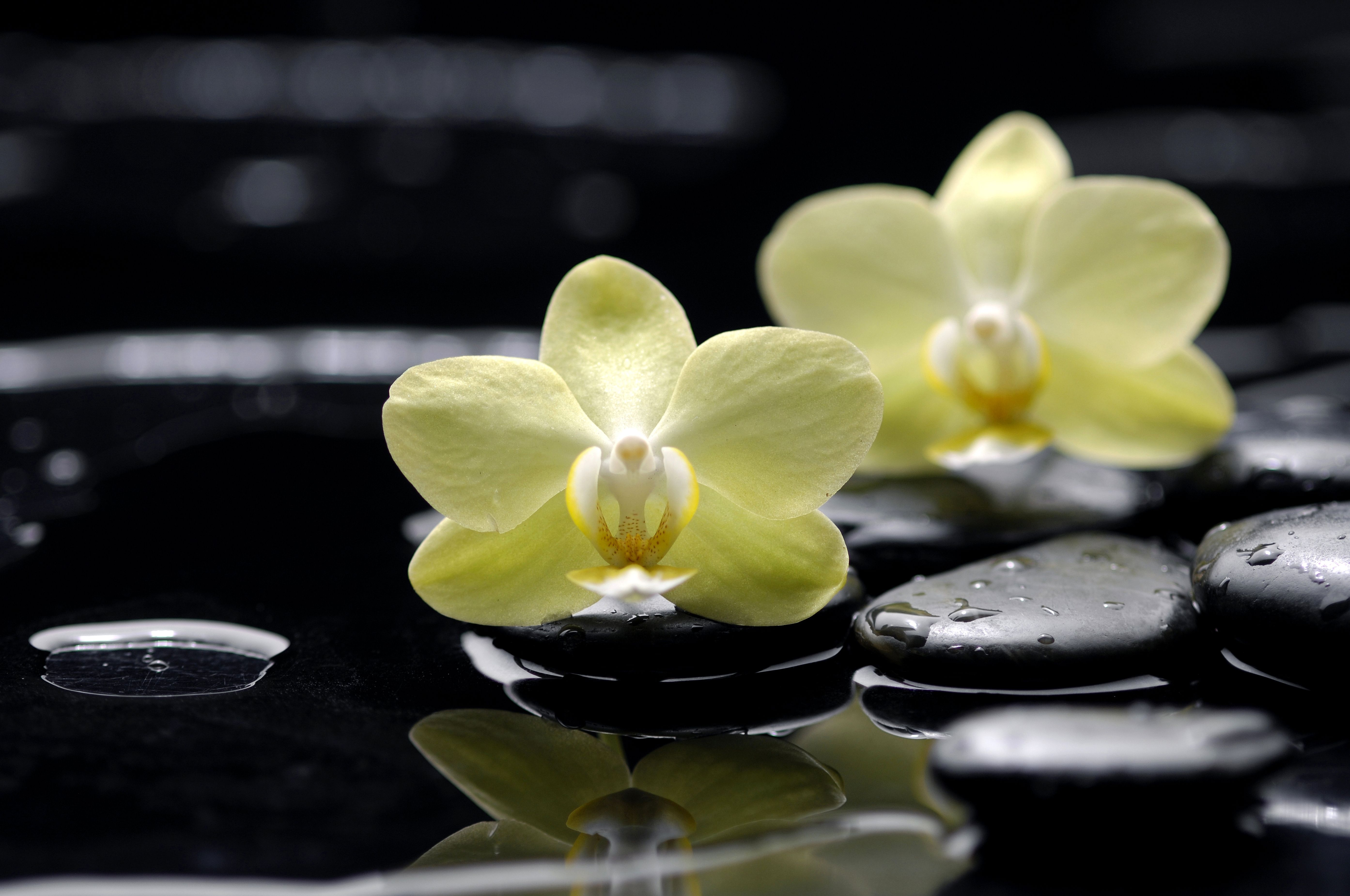 Yellow Orchids On Black Flat Stones Creates A Beautiful Water Reflection