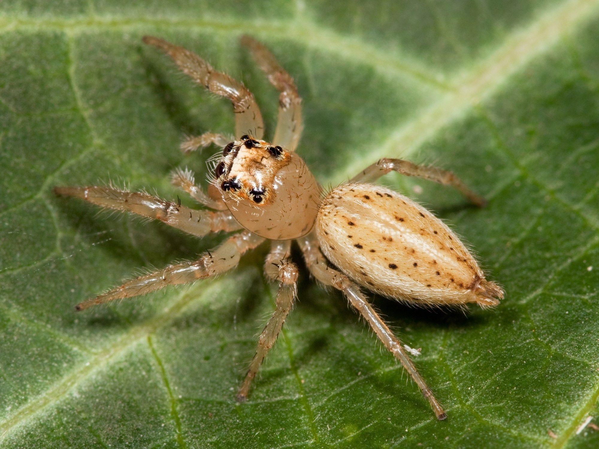 Spider download free