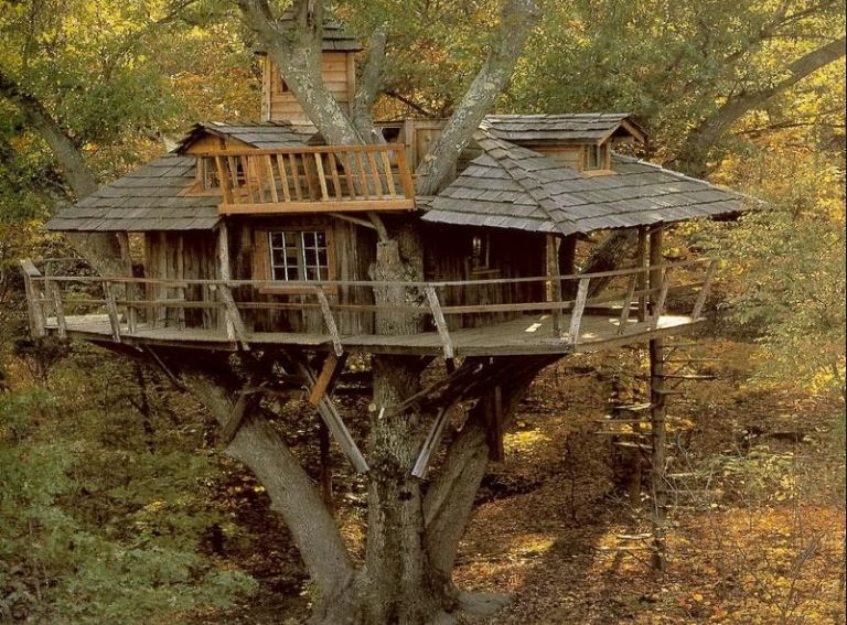A really cool tree house  Tree Houses in 2019  Cool tree houses Tree house designs House