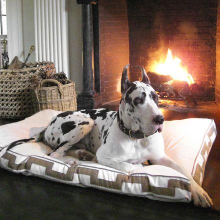 Pet S On Furniture Do Or Don T Great Dane Dane Dog