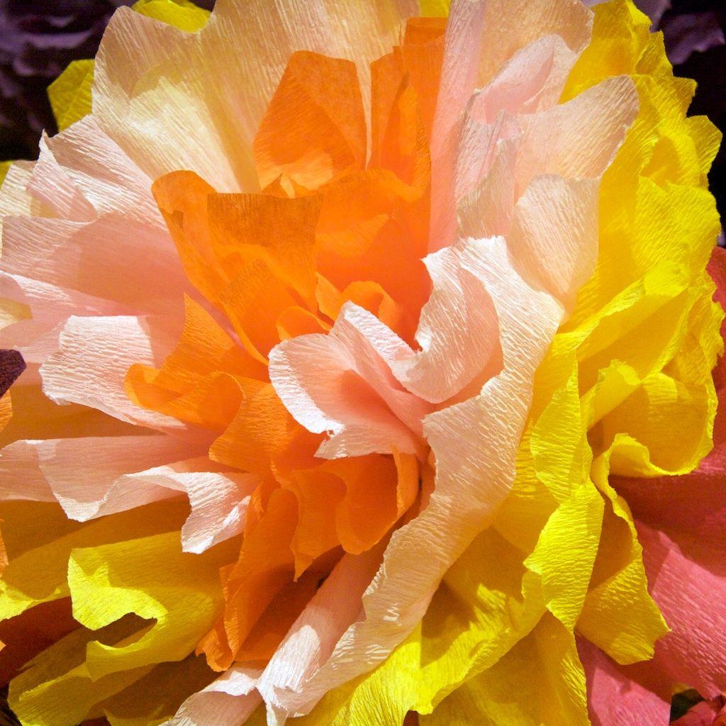 Crepe paper flowers a tutorial crepe paper flowers crepe paper crepe paper flowers a tutorial mightylinksfo