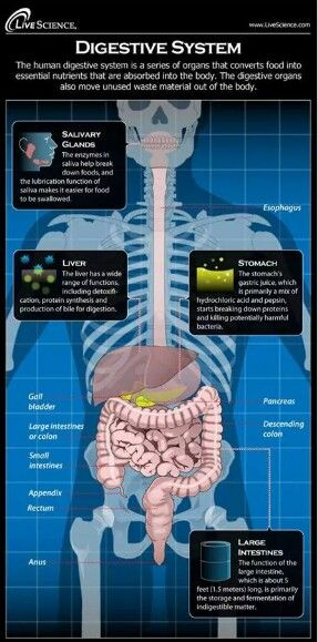 Digestive system explained nutrition class pinterest medicine digestive system explained ccuart Image collections