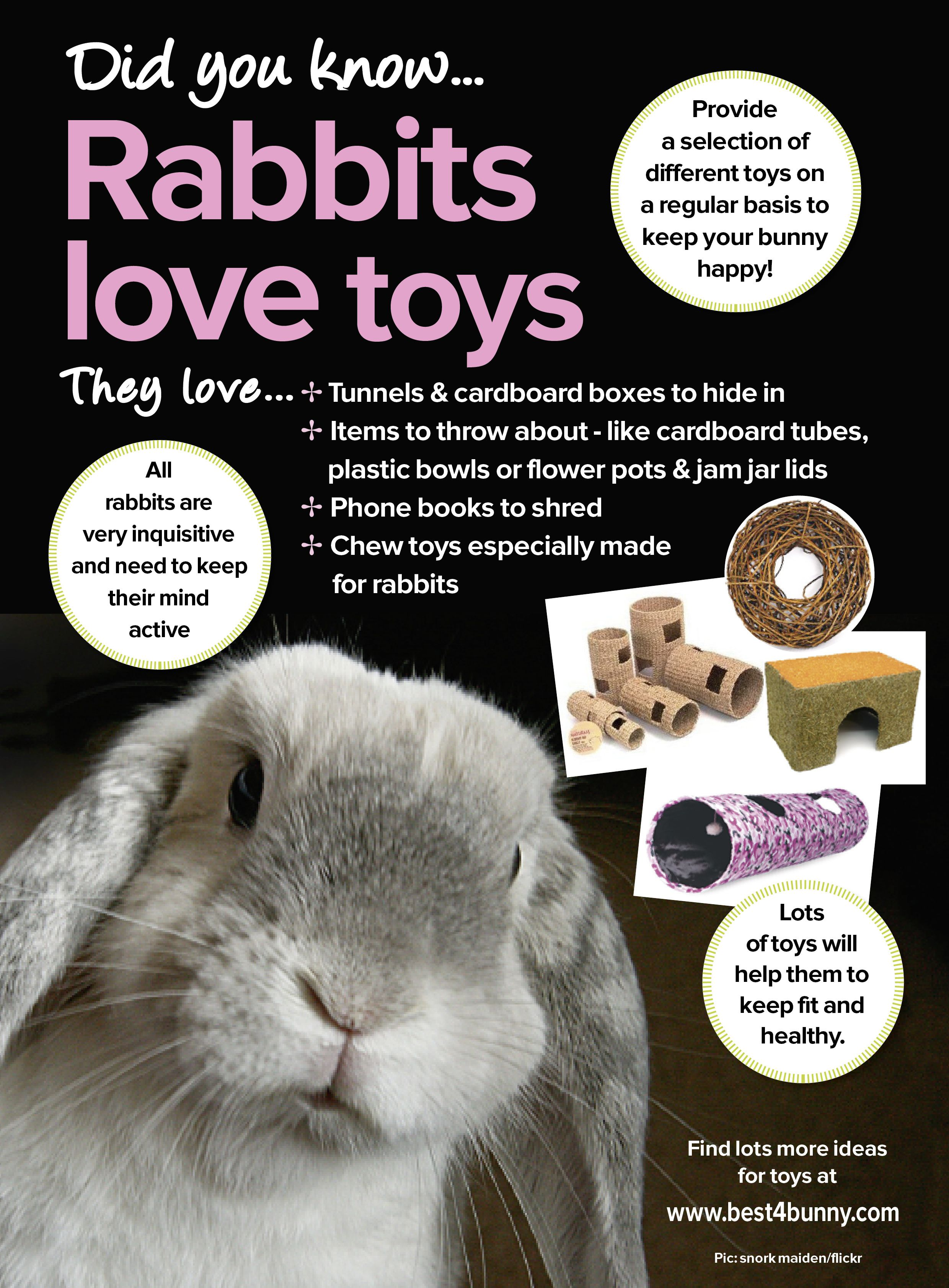 Rabbits Truths On