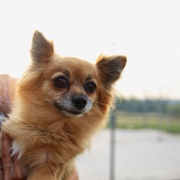 Calgary Humane Society | Pets Interesting Information