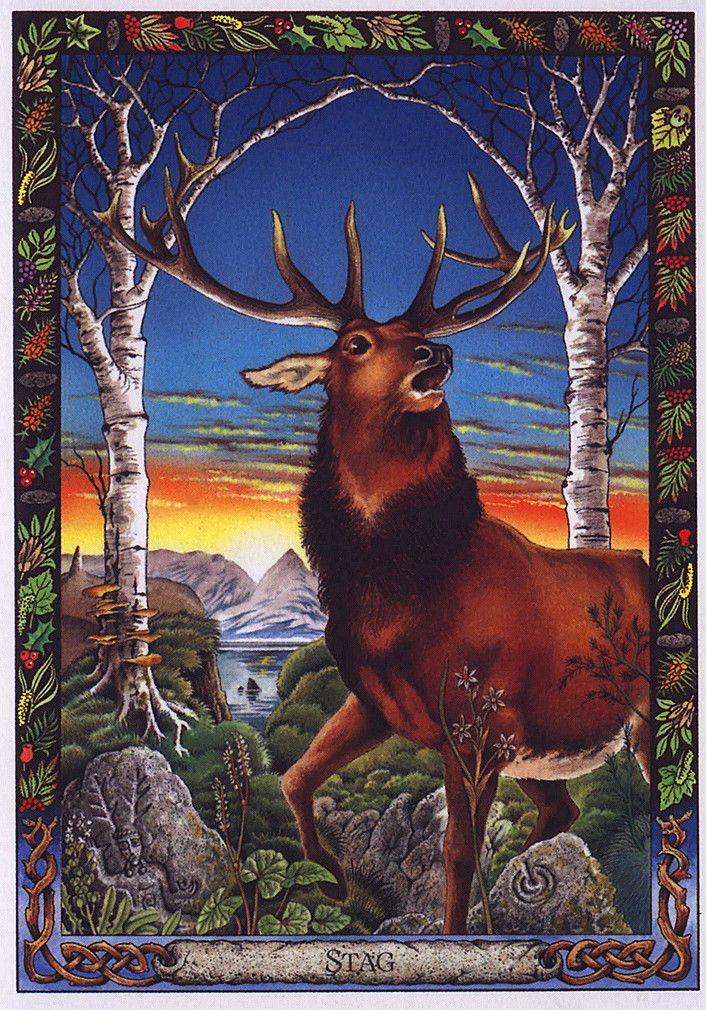 Animal Tarot: Druid Animal Oracle Deck By Bill Worthington