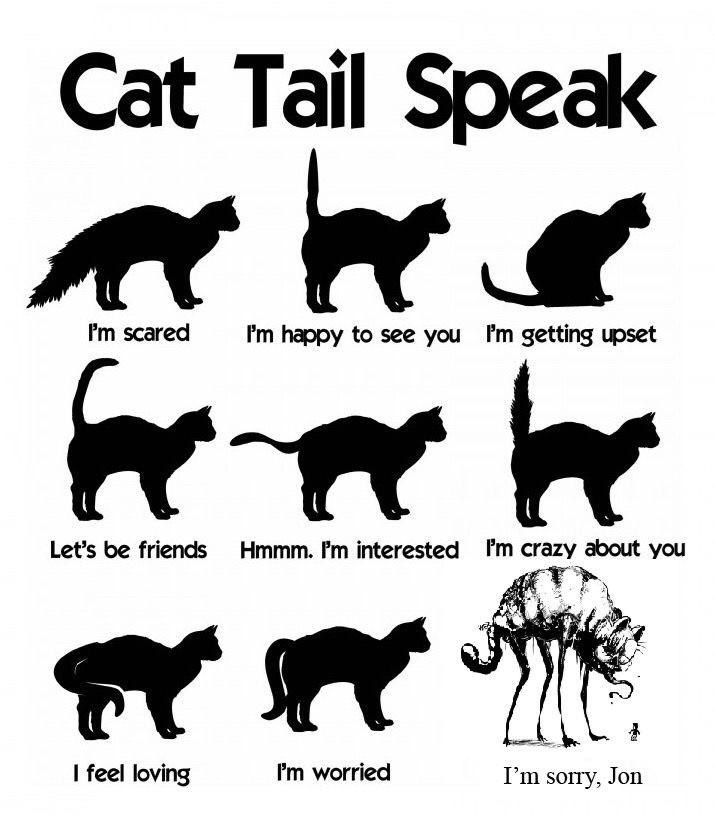 Understanding Cat Tail