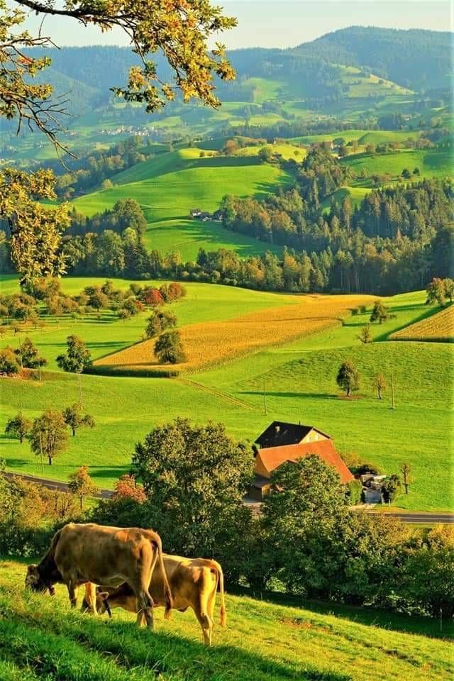 Nezaket Efe Grass field, Field, Grass