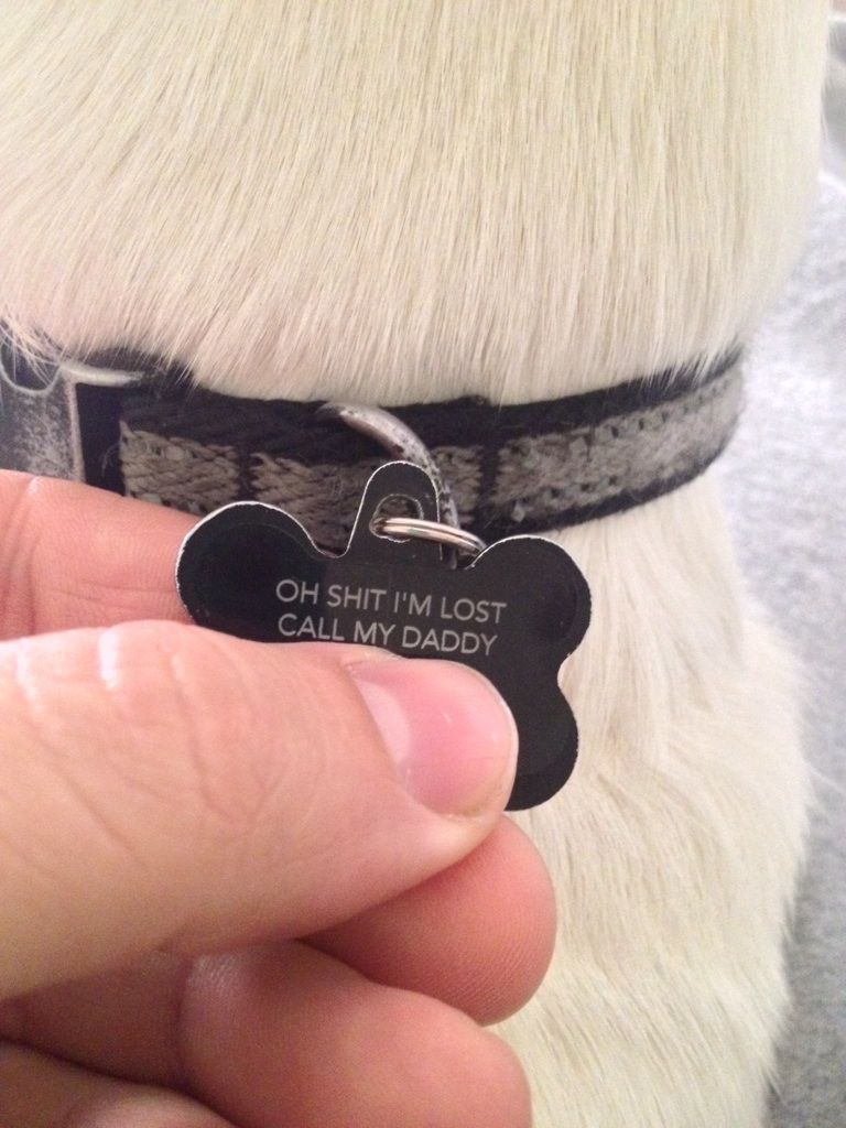 Clever Lost Dog Tag Losing A Dog Dog Tags Funny Pictures
