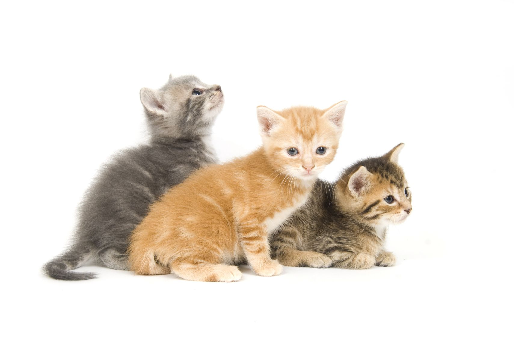 Top 11 Tips For New Kitty Parents Cat Insurance Pet Care Pets