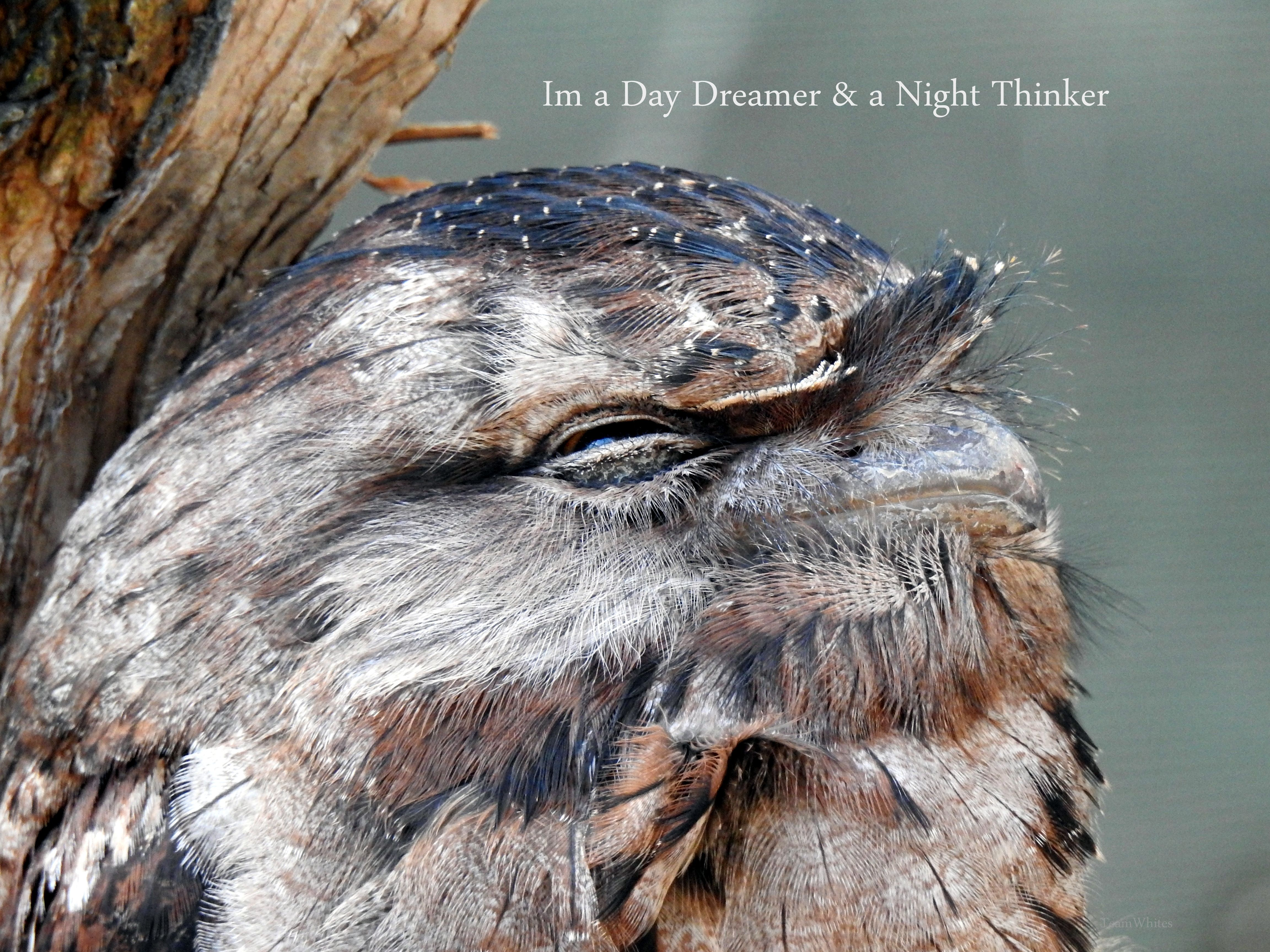 Quotes Day Dreamer Night Thinker Amature Photography Nikon