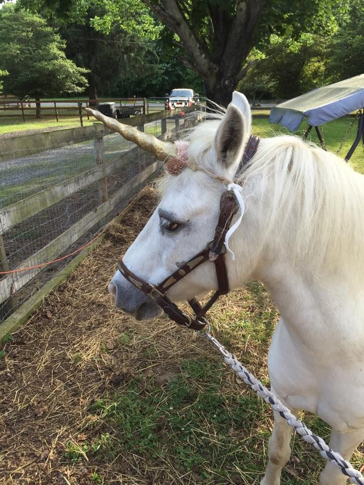 NJ Traveling Petting Zoo with Farm Animals and Pony Rides