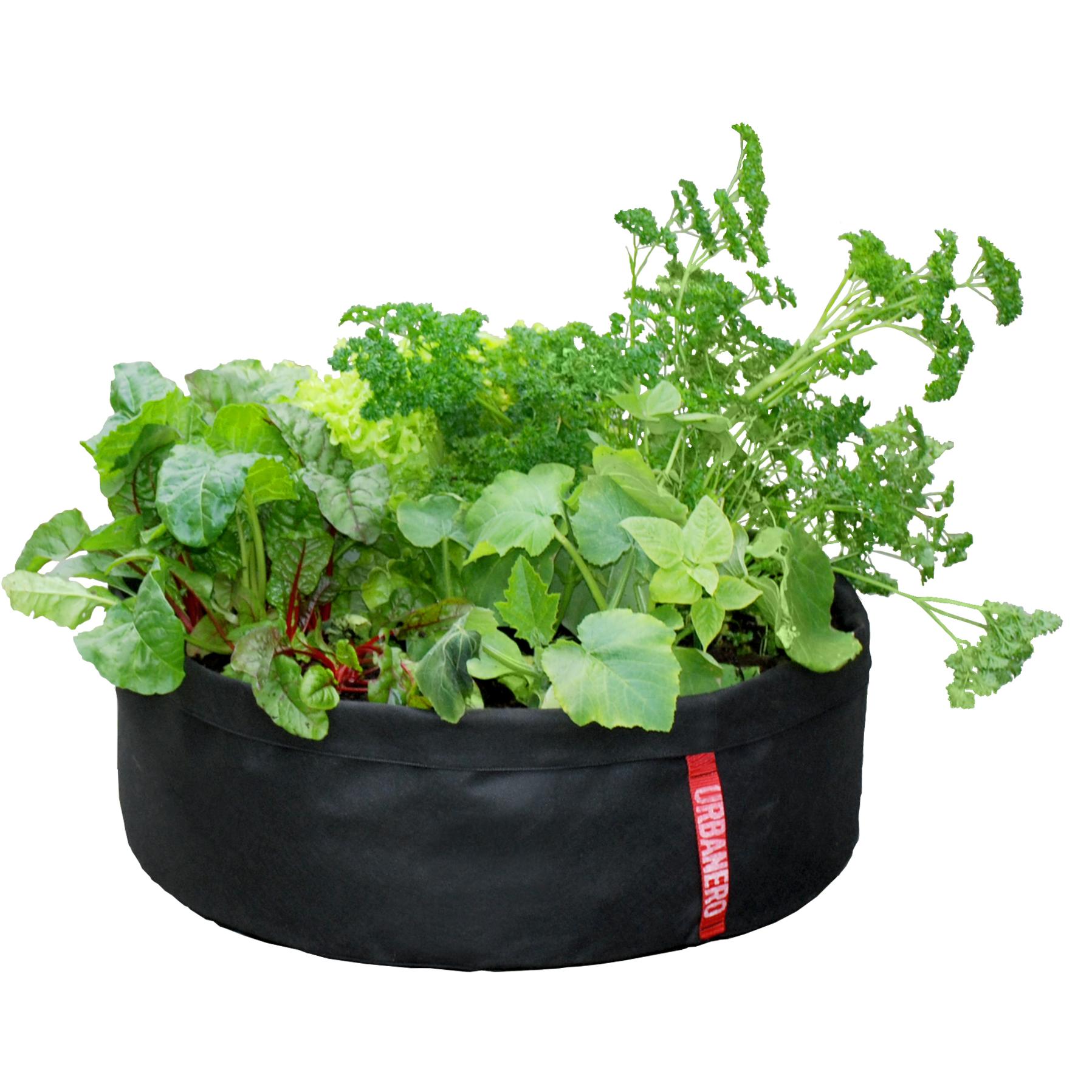 1000+ images about Sommarblommor och växter i kruka on Pinterest ...
