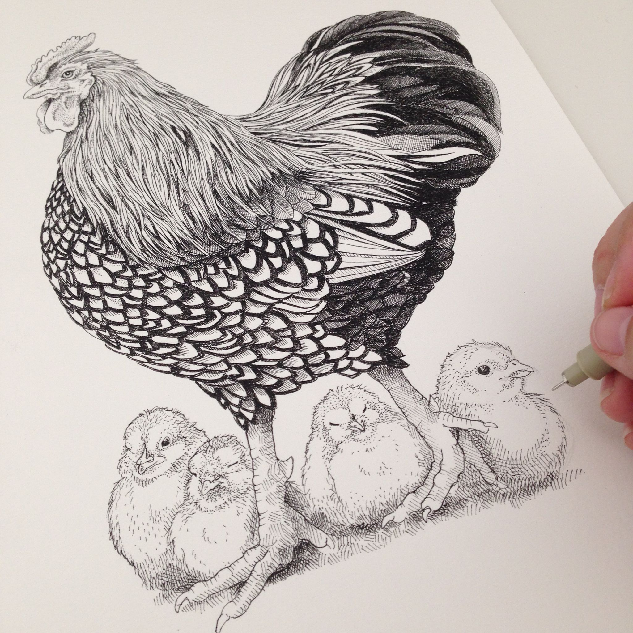Rooster and his chicks | Father's day drawing – Hand drawn artwork by Draw Doodles Study.