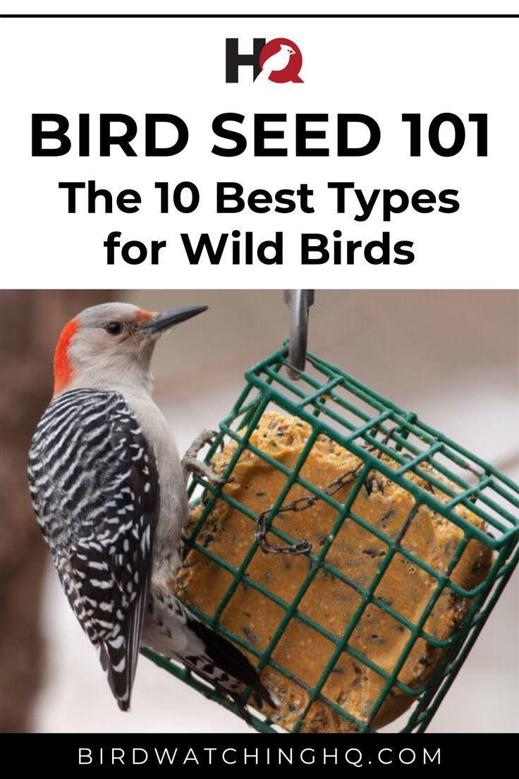Bird seed 101 the 10 best types for wild birds birds
